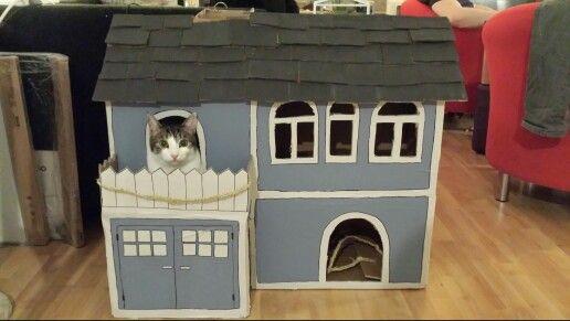 Katze.jpg
