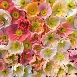 Flowers house 16may16 instagram floretflower_b_426x639.jpg