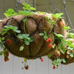 tolle idee erdbeeren im topf pflanzen. Black Bedroom Furniture Sets. Home Design Ideas