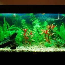 Sch ne aquarium ideen for Aquarium einrichtungsideen