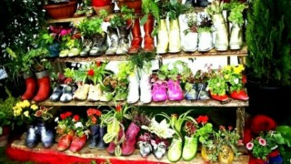 Garden design old shoes shoe rack flower pots.jpg