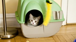 Hidden litter box.jpg