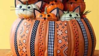 Kitty pumpkin 1 m.jpg