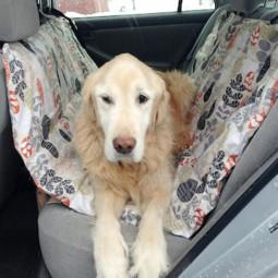 Original_emily fazio_diy dog car seat_golden retriever in car 1.jpg.rend_.hgtvcom.1280.960.jpg