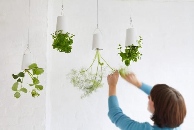 M chtet ihr kr uter zu hause selbst pflanzen for Pflanzen zu hause
