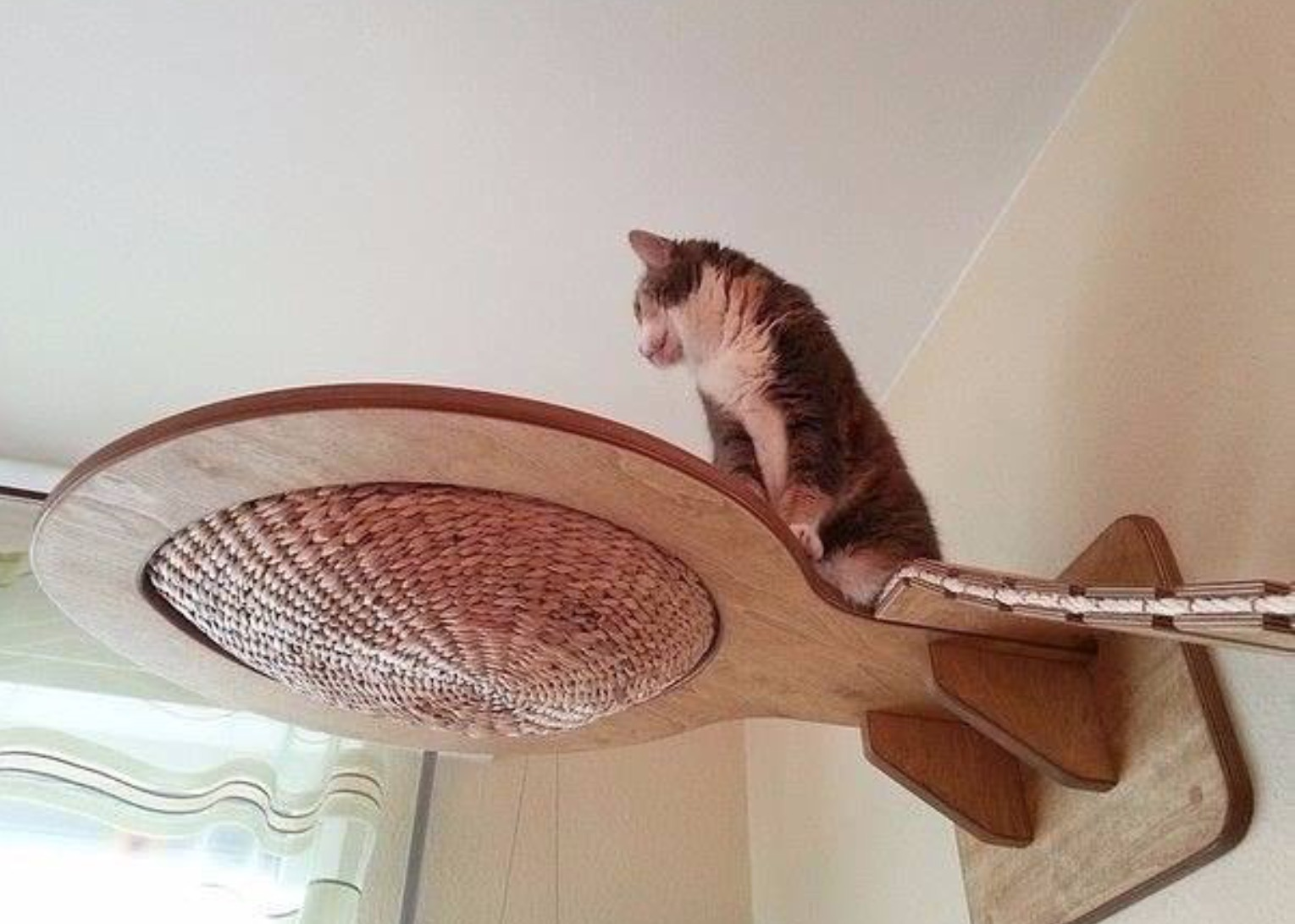 kletterm glichkeiten f r katzen