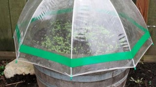 06 seed starting in mini greenhouses 1.jpg