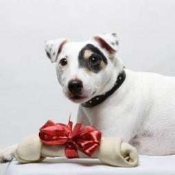 65297 425x283 dog_with_christmas_bone.jpg