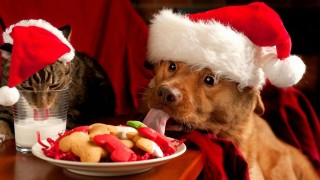 Christmas cat and dog1 1024x477.jpg