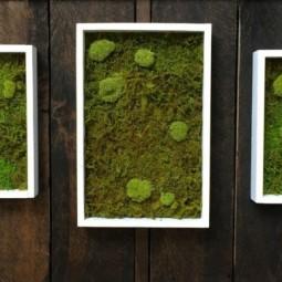 W nde mit moos dekorieren for Wohnung dekorieren app