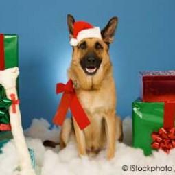 Pet dog christmas presents12.14.jpg
