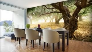 Olivenbaume landschaften fototapeten f.jpg