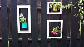 Add a pop of color to your fence using old picture frames and up cycled cans as planters.jpg