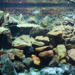 Decoration wonderful design aquarium aquariumartis bold coarser leaf shapes wonderful aquascape aquarium designs saltwater aquarium lighting need wide aquarium saltwater pet fish natural.jpg