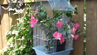 Cage plant hanger.jpg