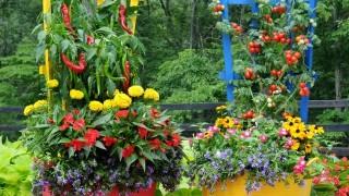 Colorful vegetable garden.jpg