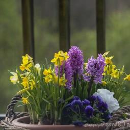Frühling auf dem Balkon