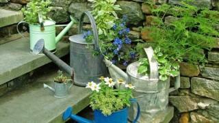 Giesskannen treppenhaus deko frische blumen topfpflanzen garten 1.jpg