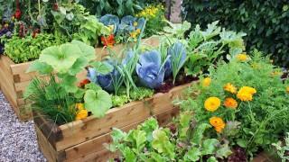 Patio vegetable garden 2_mini 1.jpg