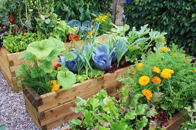 Ideen Für Gemüse Und Kräuter Auf Dem Balkon Nettetippsde