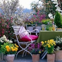 Plants for east faced balcony_mini.jpg