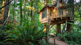 Treehouse point.jpg