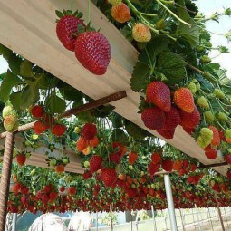 tolle ideen wie man erdbeeren pflanzen kann. Black Bedroom Furniture Sets. Home Design Ideas