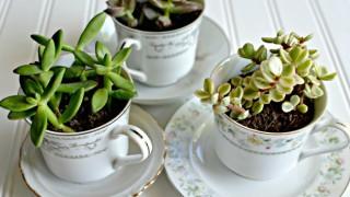 Create a tea cup succulent garden.jpg