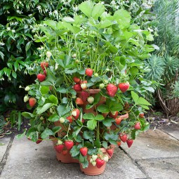 Elho 3 tier strawberry planter.jpg