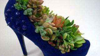 Indoor succulent diy ideas 3.jpeg