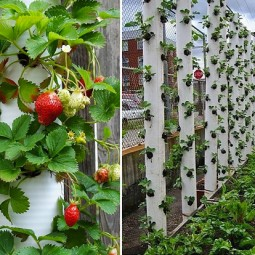 Vertical strawberry tube planter collage fb.jpg