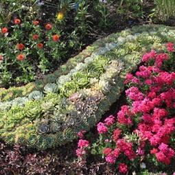 Blumenbeet anlegen teppichbeet bodendecker steingarten sukkulenten hauswurz.jpg