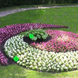 Blumenbeet anlegen teppichbeet sorten schema blühende bodendecker.jpg