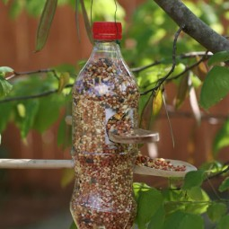 Make a bird feeder using a recycled soda bottle and two wooden spoons.jpg