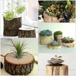 Df5029b3ed158c226ee0105bd9b81116 plant pots flower pots.jpg