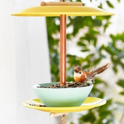 Gallery 1498146427 dinner plate bird feeder.jpg