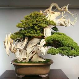 bonsai baum als perfekte dekoidee f r den indoor garten. Black Bedroom Furniture Sets. Home Design Ideas