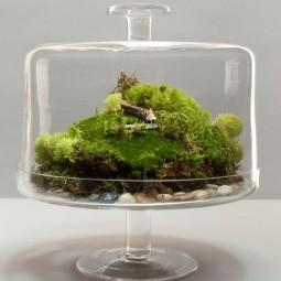 9e8ac4486feb36846563df3522e56755 mini gardens miniature gardens.jpg