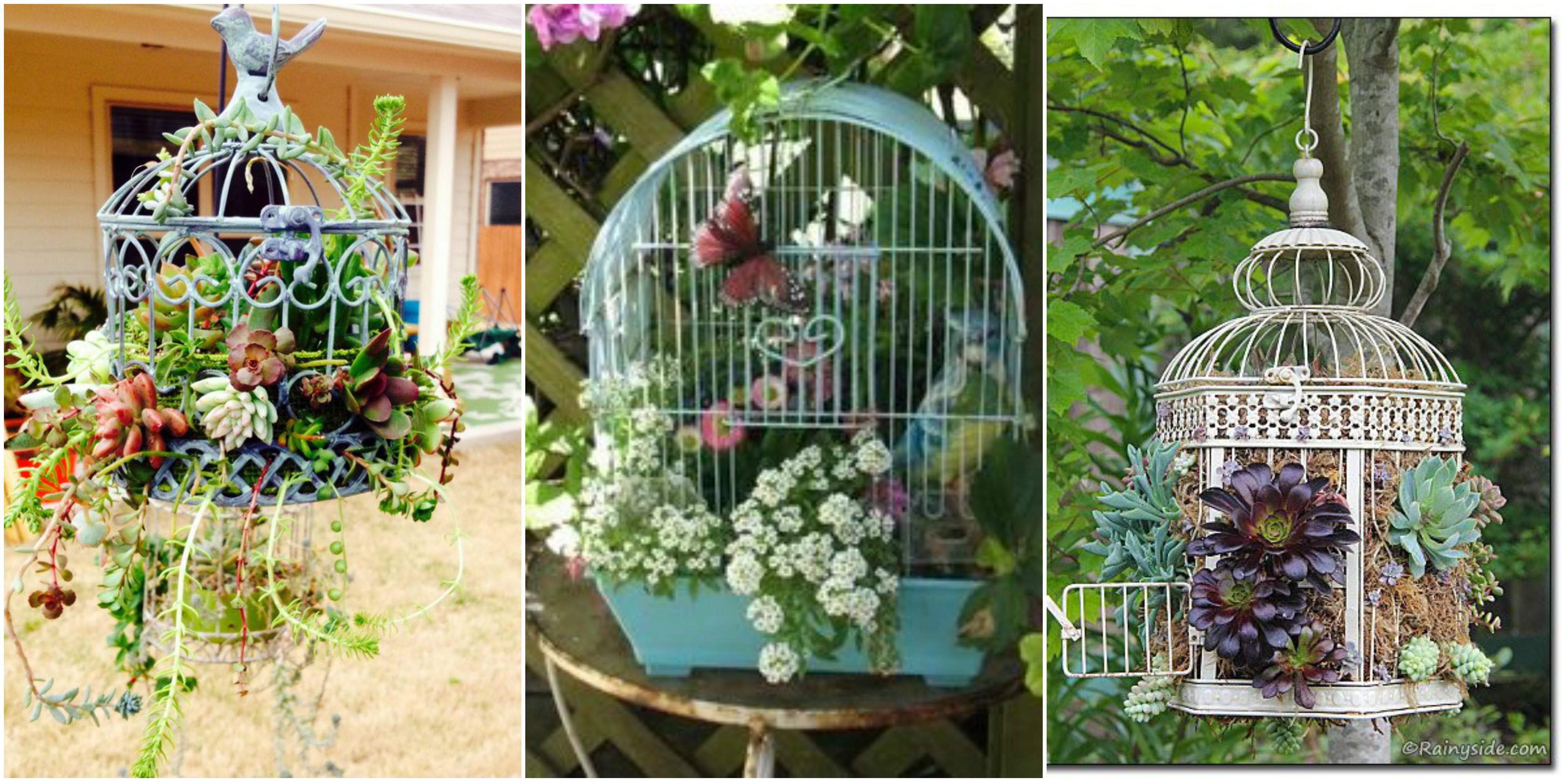 vogelk fig als deko einsetzen. Black Bedroom Furniture Sets. Home Design Ideas