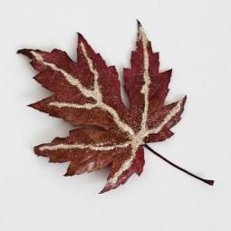 Diy glitter leaf craft smallfriendly_zpsb667c040.jpg