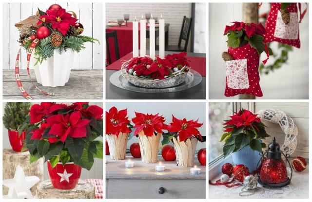 wundersch ne festliche weihnachtsstern dekoration. Black Bedroom Furniture Sets. Home Design Ideas