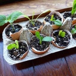 7 great ideas for an indoor herb garden.jpg