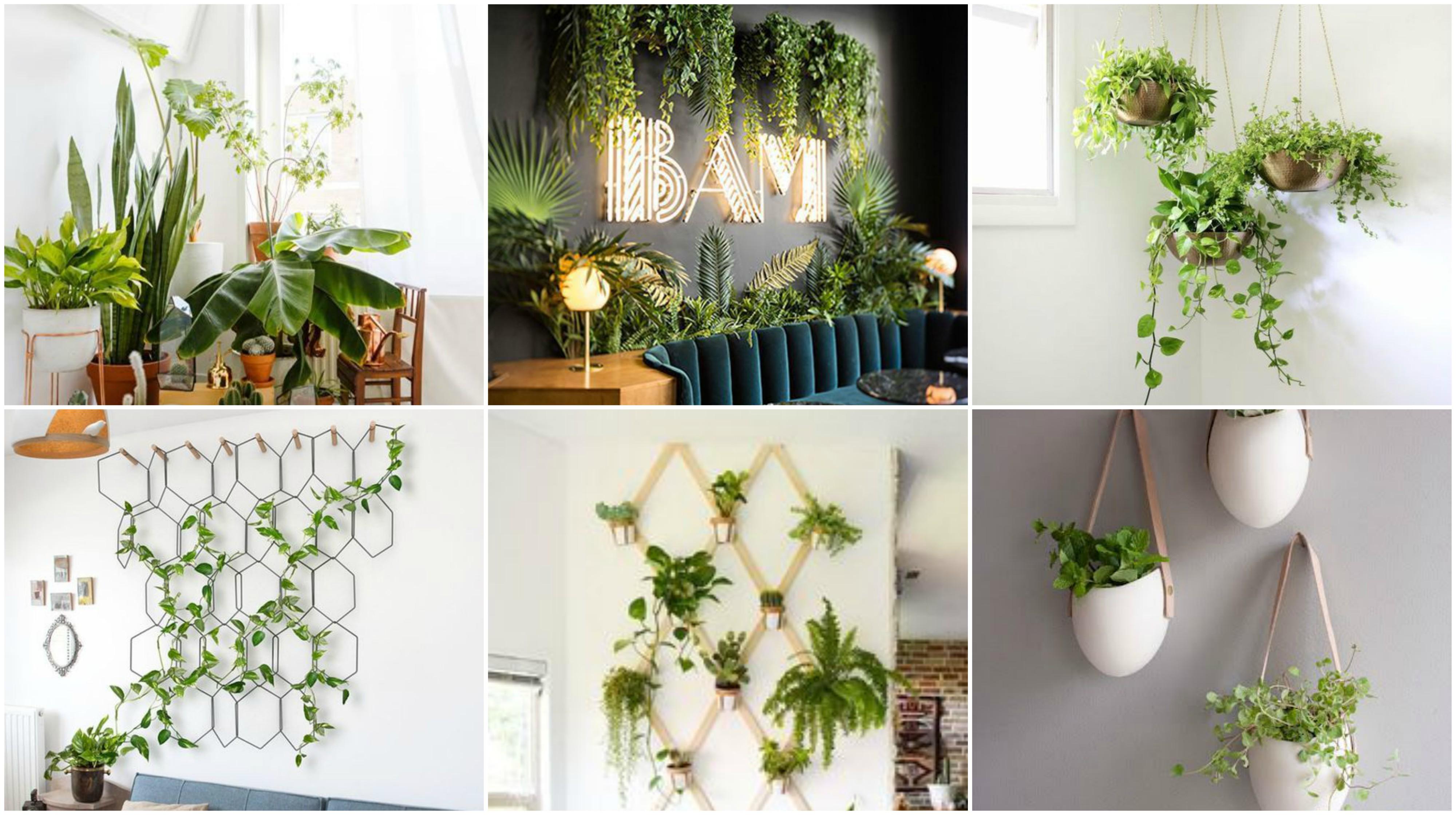 Natur ins haus bringen 20 ideen f r zimmerpflanzen for Zimmerpflanzen ideen
