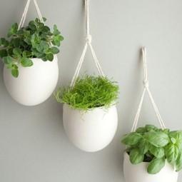 Herb5.jpg