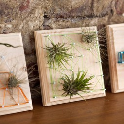 Air plant string art.jpg