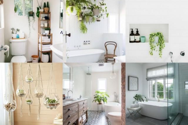 Wohnidee: Pflanzen im Badezimmer - nettetipps.de