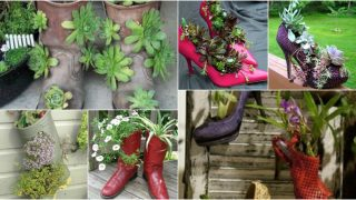 www.lushome.com, pinterest.com, alwaysintrend.com, www.inspideco.org, thegreendivas.com, www.di-vas.com