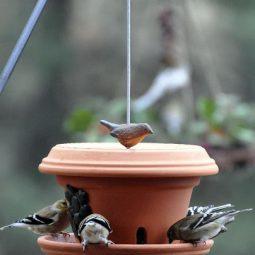 Flowerpot bird feeder.jpg