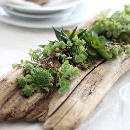 Diy succulent driftwood planter.jpg