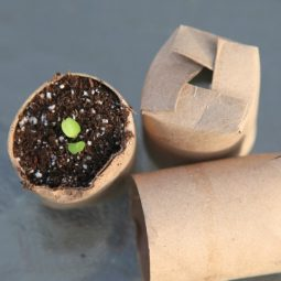 Toilet tube roll seed starting container.jpg